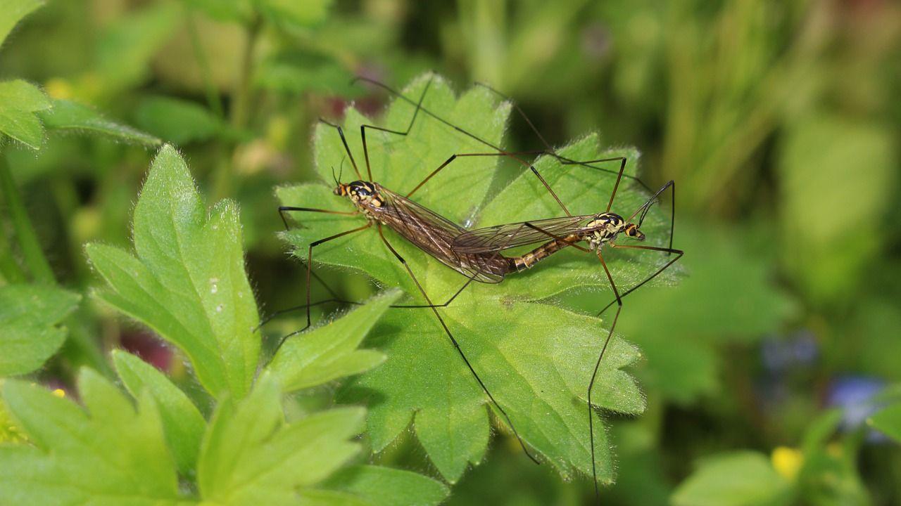 Komary – jak sobie z nimi radzić?