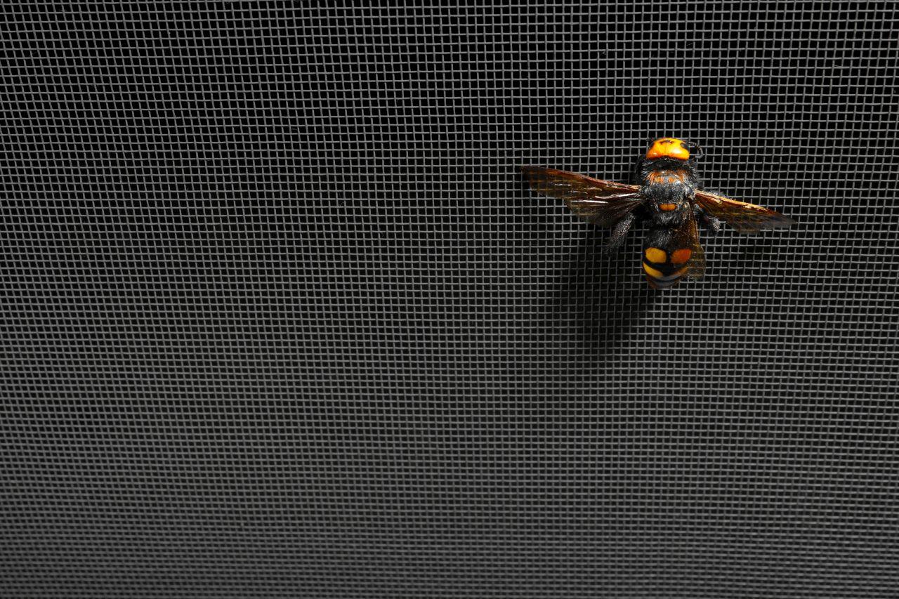 Jak uniknąć komarów i innych owadów w okresie letnim