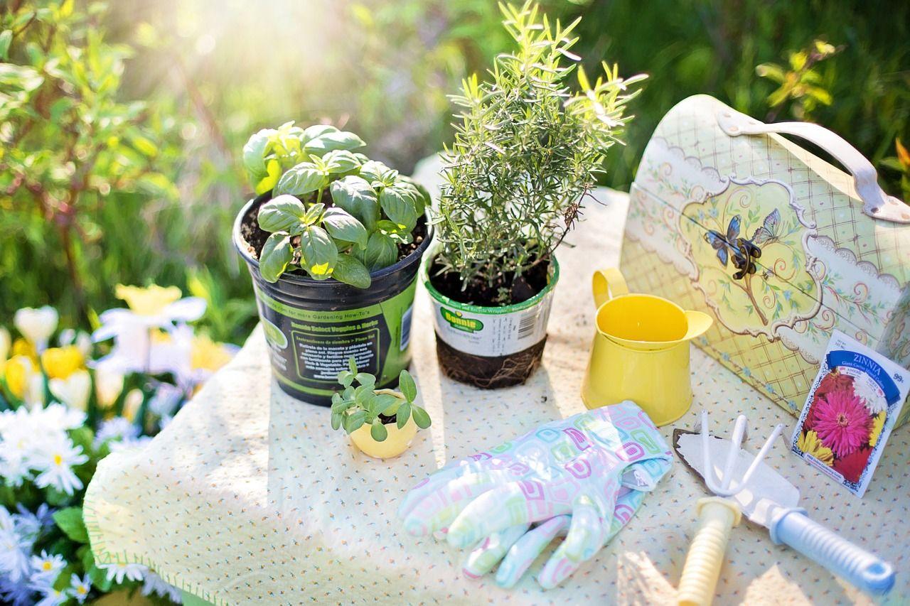 Najpopularniejsze akcesoria do palenia suszów roślinnych